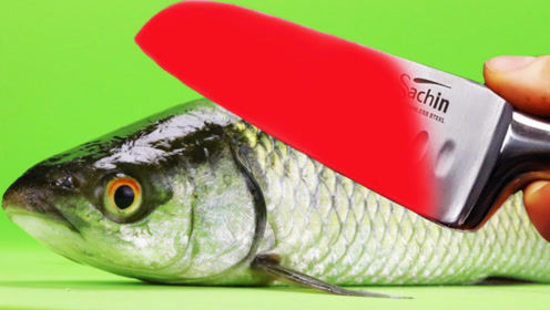 老外将菜刀加热1000摄氏度,作用在活鱼身上,直接闻到烧焦味
