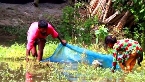 鱼多就是好,随便找块纱网就能捞到不少鱼!