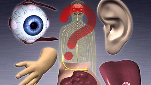 """人体""""摘下""""哪几个器官还不会死亡呢?答案令人难以置信!"""