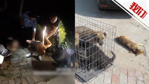 实拍民警逼停偷狗贼车 后备箱一开:藏5只狗其中1只已窒息死亡