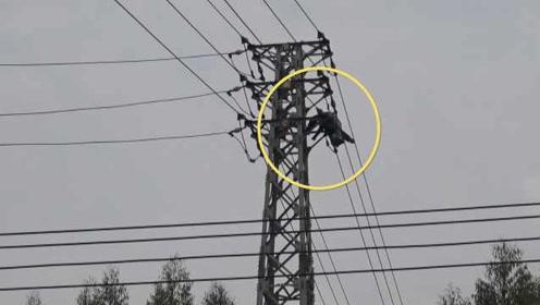 实拍:男子爬高压电塔摘蜂窝被电击,半身挂空中摇摇欲坠