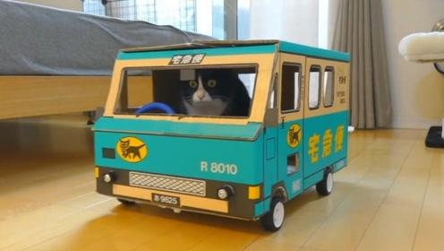 """用废弃的纸壳给猫咪做了一辆车,从此成为""""有车一族"""""""