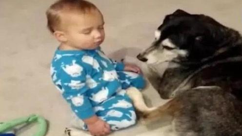 狗狗真温柔,看着宝宝打盹儿,网友:这还是我认识的哈士奇吗?