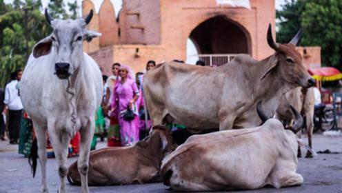 印度人为了信仰不吃猪肉、牛肉,那他们吃什么肉?只吃素吗?