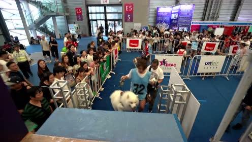 亚宠展宠物运动会,大批狗狗集体入水,上演激萌一夏