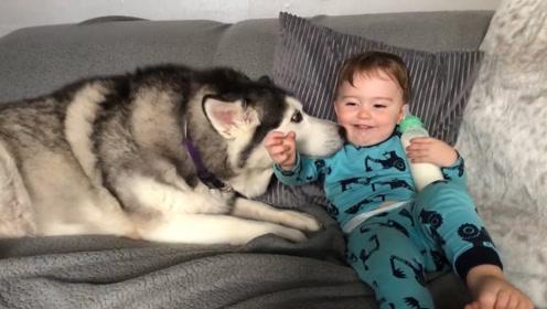 宝宝在沙发上喝瓶瓶奶,哈士奇卧在旁边吐舌头