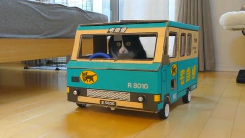 小伙脑洞大开,给猫咪自制小货车,猫咪充当司机可真是好玩