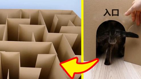 把两只猫放进迷宫中,它们能自己找到出口吗?结果有点意外