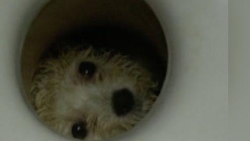 男主上完厕所发现不对劲,仔细一看不淡定了,怎么有双眼睛?