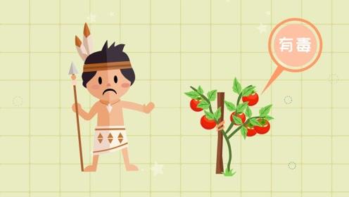 为什么很早之前人们不敢吃西红柿?