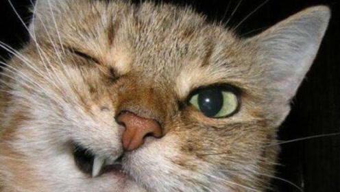 您的快递里有一箱猫咪!可爱猫咪的调皮日常!萌到冒泡!
