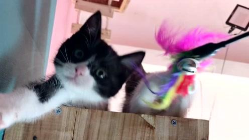 说出来你们可能不信,我被一只可爱的小猫咪砸中了脑袋