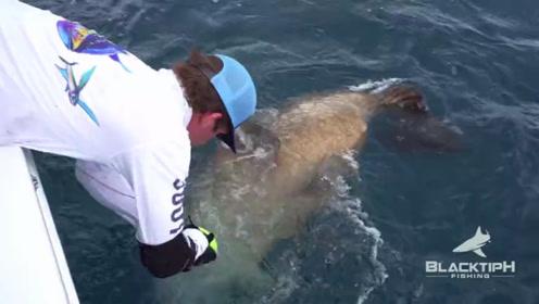 钓获一条巨型石斑鱼,摸了摸又放归了大海