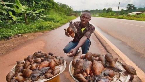 此食物中国吃货看见都头疼!非洲却吃到快灭绝,画面让人大倒胃口