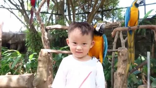 我是一个遛鸟男孩,一动都不敢动