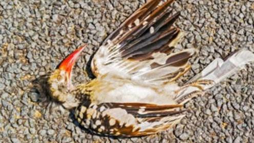 鸟类视频短暂,为什么死后看不到他们的尸体?看完视频恍然大悟