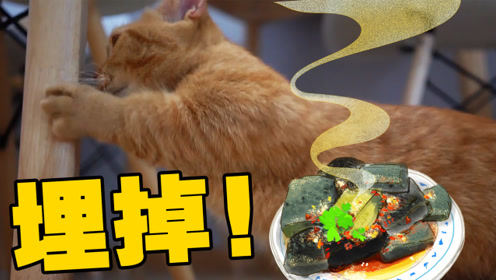 橘猫闻臭豆腐后疯狂刨地,下一秒竟吃了起来?猫:这屎真香!