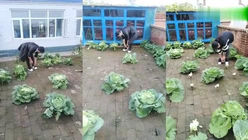 为了种菜,什么想法也冒出来了,这方法也是绝了