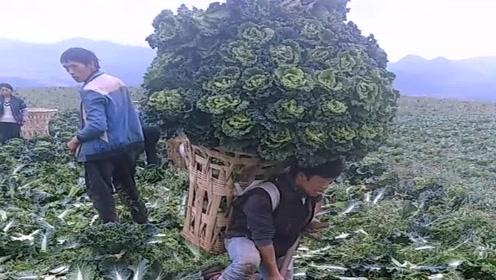 农村人靠种菜养家真不容易,一次背这么多蔬菜,看着都觉得吃力!
