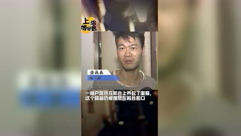 上海一租户阳台上养蜜蜂 邻居上厕所不敢动