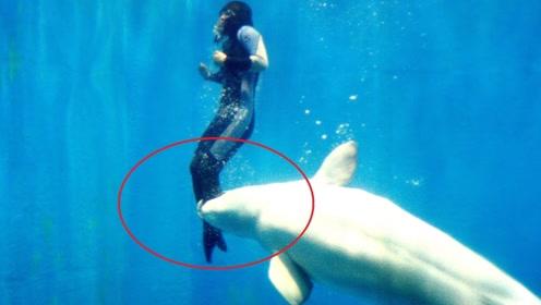 """要不是镜头拍下,你能想象这么危险时刻,白鲸竟会""""出手""""相救!"""
