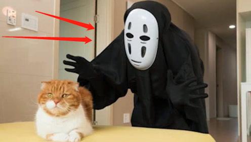 """主人扮""""无脸男""""吓猫失败,竟把目标转向小孩子,下一秒尴尬了!"""