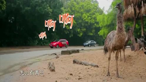 魏大勋说要保护李沁,没想到看到鸵鸟,直接被吓得跑李沁怀里了