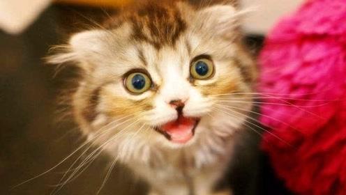 """为什么我们学猫叫时,猫咪也会""""回应""""你,原来是要告诉你这些!"""