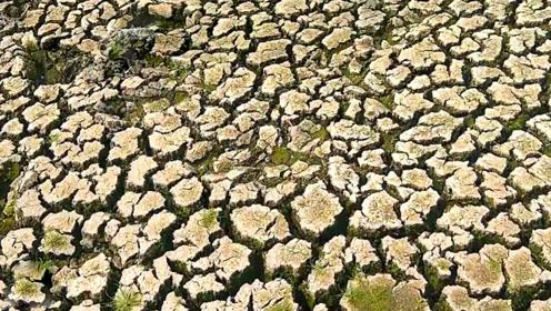 一片开裂的旱地里,农村男子随手掰开泥土,下面好多鱼