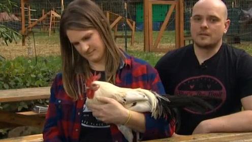 法国公鸡打鸣太吵,被邻居告上法庭,结果倒赔鸡1000欧元!