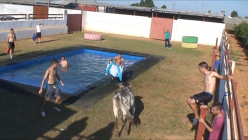 发怒的水牛撞过来,一头把男子撞进水中,太危险了