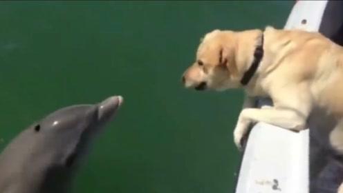 跨种族的友情!狗狗和海豚一见钟情,每天都要一起游泳!