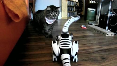 送给小猫咪一只机器恐龙,猫咪都吓懵了