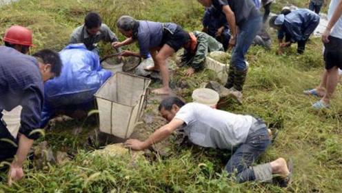 内蒙放羊娃坑中救羊,10亿黄金宝藏重现,村民哄抢遭专家包围