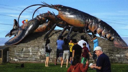 """这只龙虾活了134岁,国家为其颁发""""免死金牌"""",网友:成精了"""