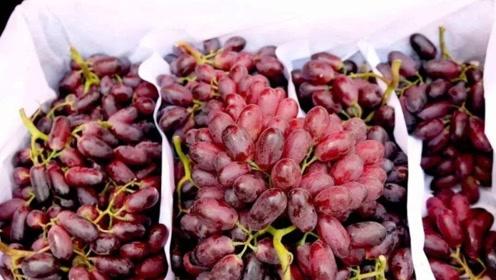 吃哪种葡萄最养生?秋季葡萄不要吃错