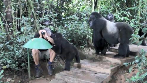 老人不小心在野外睡着,母猩猩带着孩子路过,下一幕太暖心