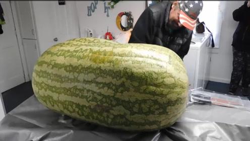 小伙买了一个260斤的大西瓜,切开那一瞬间,不知所措