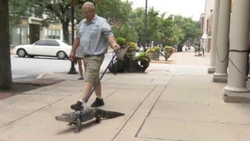 """外国老头将鳄鱼当宠物狗养,上街溜""""鳄鱼""""时,引来路人围观"""