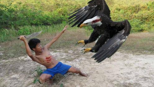 """国外小孩不信邪,设下陷阱""""徒手""""抓老鹰,这身手让人拍手叫好!"""