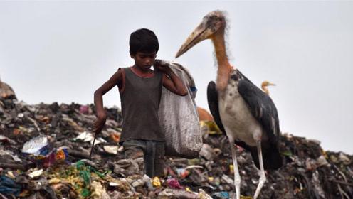 印度最大垃圾场:面积39公顷每天收500吨垃圾,还有人住这里
