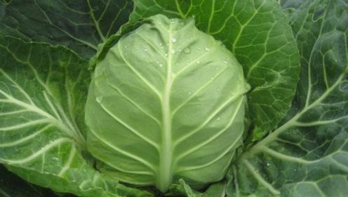 秋季,隔三差五吃这菜,滋养脾胃去秋燥,提高身体免疫力