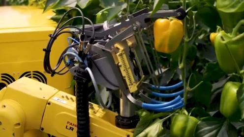 老外发明摘辣椒机器人,自动识别摘取成熟辣椒,网友:够先进