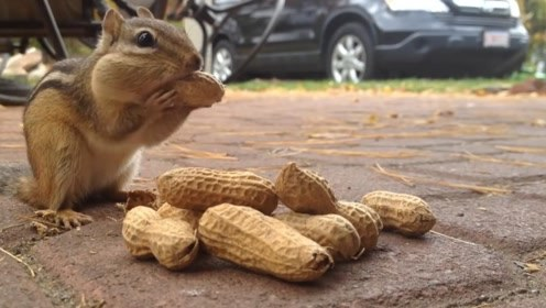 男子在地上放了一堆花生,一会儿就跑来一只松鼠,简直太可爱了