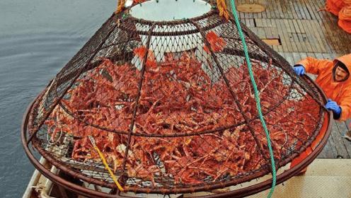 北冰洋帝王蟹捕捞作业,一笼上来,能卖好多钱