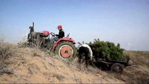 村民开拖拉机运树苗