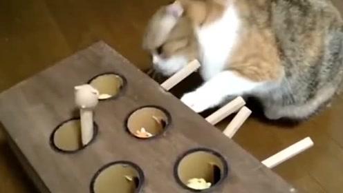主人想让猫咪体会游戏的乐趣,做了个打地鼠机,镜头记录游戏过程