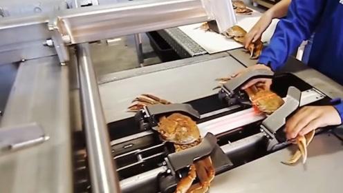 """国外用""""螃蟹机""""处理螃蟹,吃法难以接受,网友:这样吃没有灵魂"""