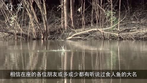 一盆肉扔进河里,水下食人鱼像发了疯一样,瞬间炸开了锅!