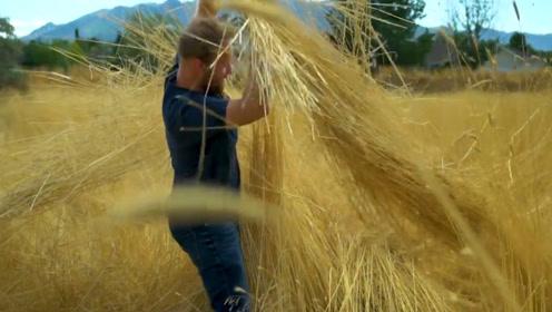从田地到餐桌,小麦是怎么华丽变身成面包的?